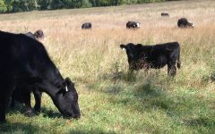 Cattle and Cowhands: How multi generational farmers help define Rolla's culture